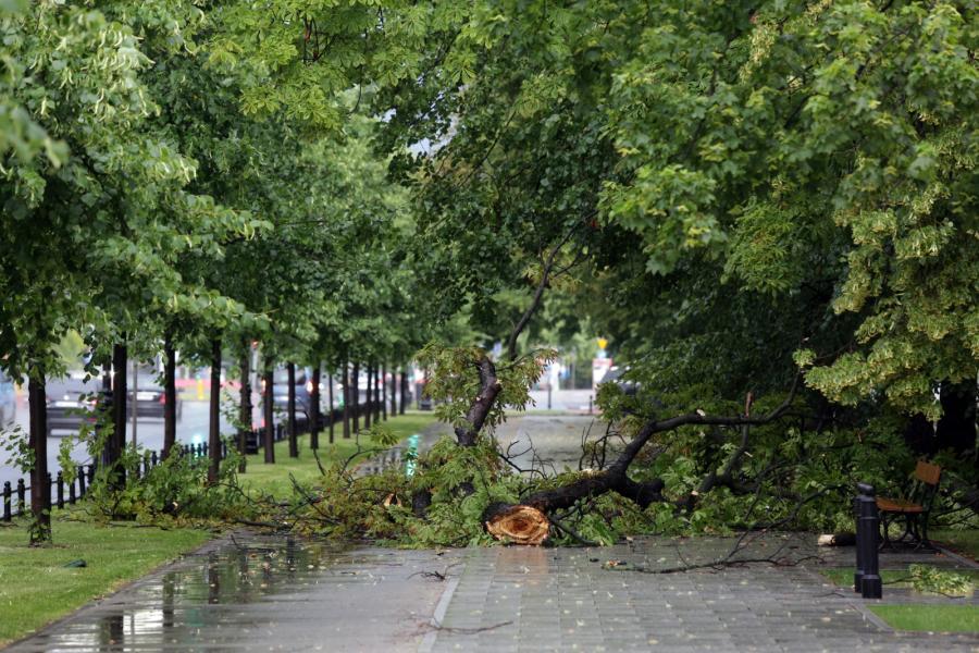 Gałęzie utrudniały przejście chodnikami