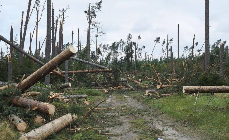 Zniszczony przez nawałnicę las