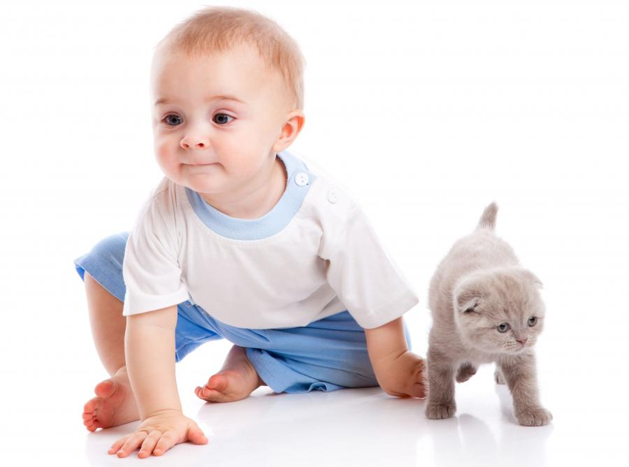 Kontakt z kotem wzmacnia odporność dziecka