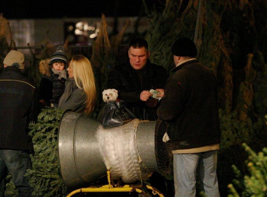 Dariusz Michalczewski kupuje choinkę