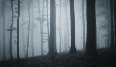 Dwa porzucone płody znaleziono w lesie na pograniczu Sosnowca i Dąbrowy Górniczej