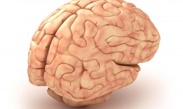 Chronią mózg, zapobiegają demencji. 10 superproduktów