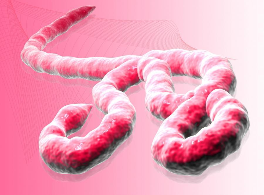 1. Wirus ebola