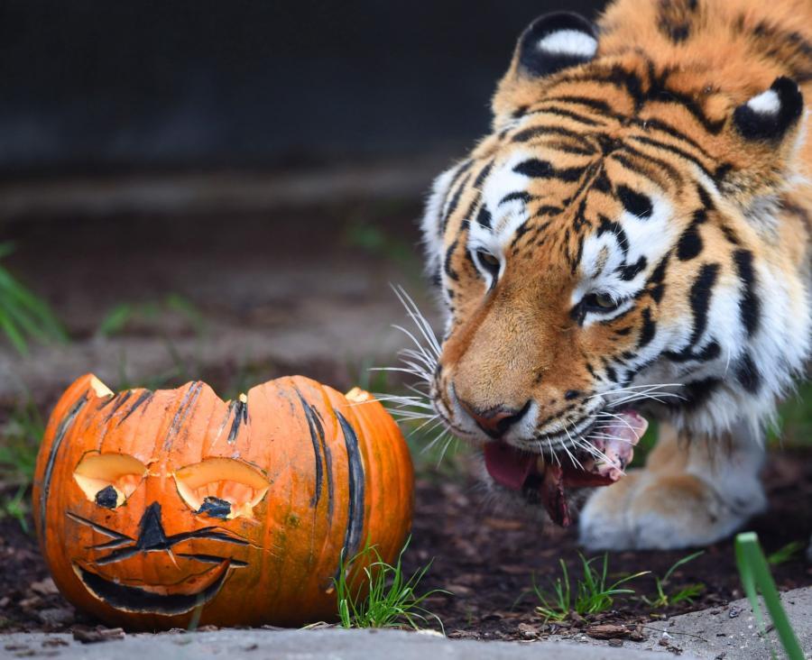 Wszechobecny Halloween