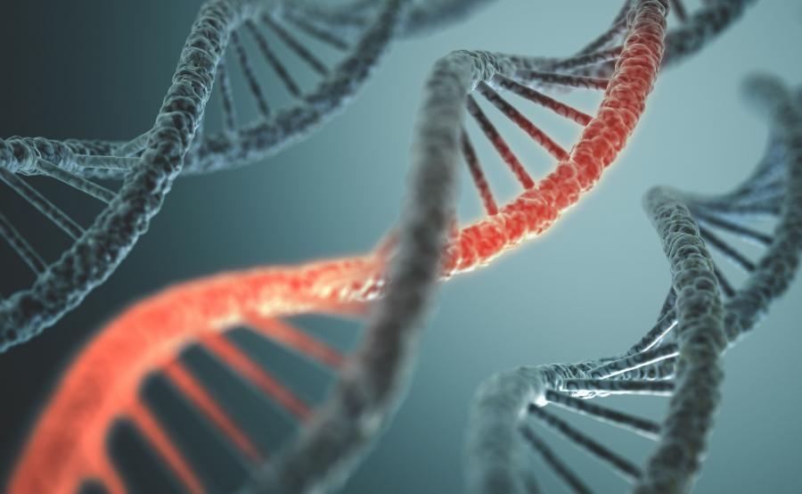 8. Uwarunkowania genetyczne
