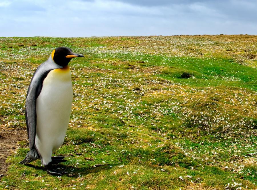 Rośliny na Antarktydzie wyrosły z miłości